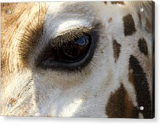 Acrylic Print featuring the photograph Giraffe Eye by Carrie Cranwill