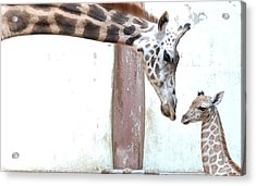 Giraffe Acrylic Print by Floridapfe from S.Korea Kim in cherl