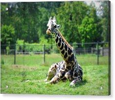 Giraffe II Acrylic Print by Eva Kondzialkiewicz