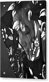 Girl With A Rose Veil 1 Bw Acrylic Print