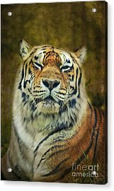 Give Me Your Tender Look Acrylic Print by Aimelle