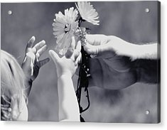 Giving Her Flowers Sweet Baby Hands Acrylic Print