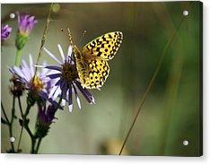 Glacier Butterfly Acrylic Print by Marty Koch