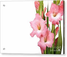 Gladioli On White Acrylic Print