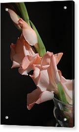 Gladiolus Acrylic Print by Dickon Thompson