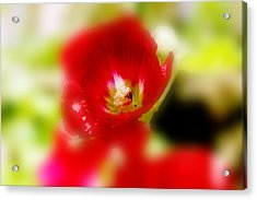 Gladiolus Acrylic Print by Toni Hopper