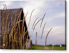 Glancing Back At A Memory Acrylic Print by Kelly Reich
