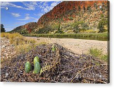 Acrylic Print featuring the photograph Glen Helen Gorge by Paul Svensen