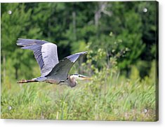 Glide Acrylic Print by Brook Burling
