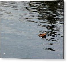 Gliding Across The Pond Acrylic Print by LeeAnn McLaneGoetz McLaneGoetzStudioLLCcom