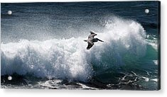 Acrylic Print featuring the photograph Gliding Pelican by Michael Rock
