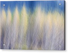 Glimpse Of Trees Acrylic Print
