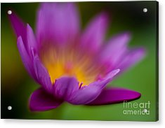 Glorious Lily Acrylic Print by Mike Reid