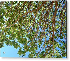 Glorious Nature Acrylic Print by Samantha Mills