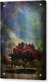 Glory Acrylic Print by Laurie Search