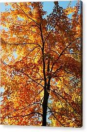 Glory Of Autumn Acrylic Print by Jennifer Compton
