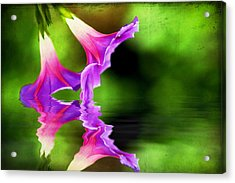 Glory Reflection Acrylic Print by Darren Fisher