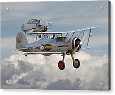 Gloster Gladiator Acrylic Print by Pat Speirs