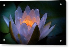 Glow In The Lily Acrylic Print by Lauren Goia