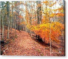 Acrylic Print featuring the photograph Glowing Beeches by Gretchen Allen