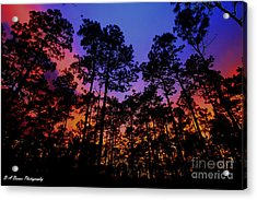 Glowing Forest Acrylic Print