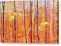 Glowing Forest  Acrylic Print by Lyle Crump