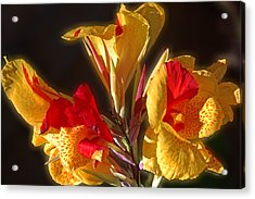 Acrylic Print featuring the photograph Glowing Iris by DigiArt Diaries by Vicky B Fuller