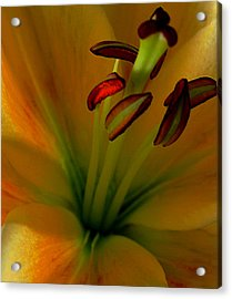 Acrylic Print featuring the photograph Glowing Lily by Karen Harrison