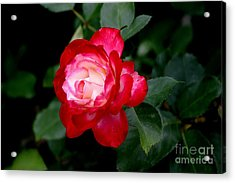 Acrylic Print featuring the photograph Glowing by Living Color Photography Lorraine Lynch