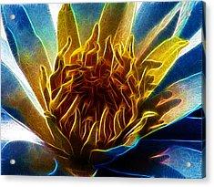 Glowing Lotus Acrylic Print