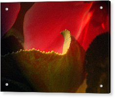 Glowing Petals Acrylic Print