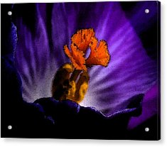 Glowing Purple Acrylic Print