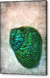 Glowing Seashell Acrylic Print by Judi Bagwell