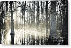 Glowing Woods Acrylic Print