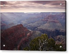 Gnarly Tree In The Canyon Acrylic Print by Andrew Soundarajan