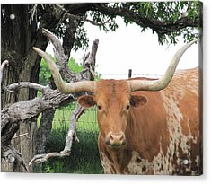 Acrylic Print featuring the photograph Go Bevo by Shawn Hughes