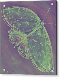 Go Green Butterfly Acrylic Print by M C Sturman