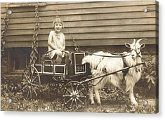 Goat Wagon Acrylic Print