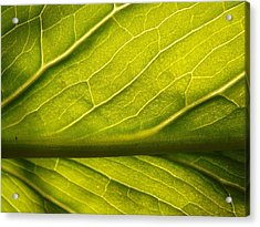 Acrylic Print featuring the photograph Going Green by Gerald Strine