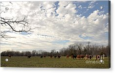Acrylic Print featuring the photograph Going Home by Cheryl McClure