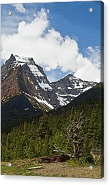 Going To The Sun Mountain Glacier National Park Spring Tree Larry Darnell Acrylic Print by Larry Darnell