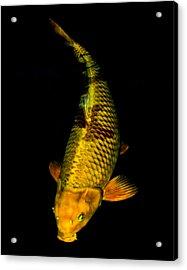 Gold Chagoi02 Acrylic Print
