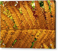 Gold Leaf Acrylic Print by William Fields