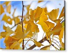 Golden Autumn Acrylic Print by Kaye Menner