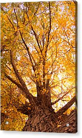 Golden Autumn View Acrylic Print by James BO  Insogna
