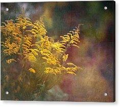 Golden Acrylic Print by Brenda Bryant