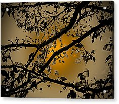 Golden Crabapple Acrylic Print