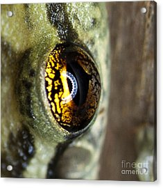 Acrylic Print featuring the photograph Golden Eye by John Burns