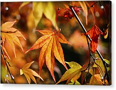 Acrylic Print featuring the photograph Golden Fall. by Clare Bambers