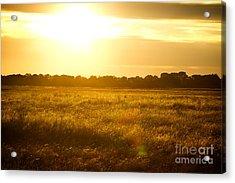 Golden Field Acrylic Print by James Serikov